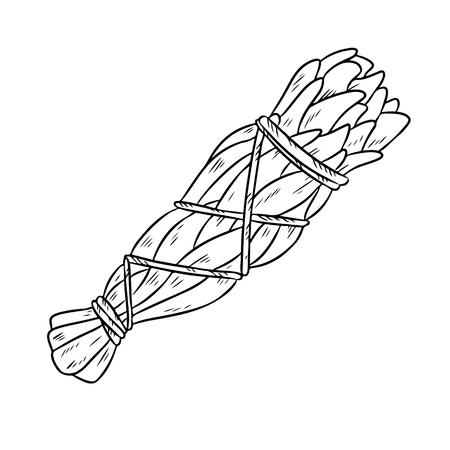 Illustration isolée d'un doodle dessiné à la main avec un bâton de sauge. Botte d'herbes de sauge blanche