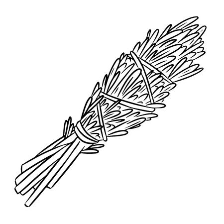Sage smudge stick hand-drawn doodle isolated illustration. Rosemary herb bundle Vetores