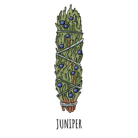 Illustration isolée d'un doodle dessiné à la main avec un bâton de sauge. Botte d'herbes de genièvre