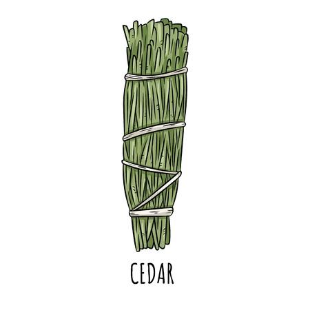 Illustrazione isolata di scarabocchio disegnato a mano del bastone della sbavatura salvia. Fascio di erbe di cedro Vettoriali