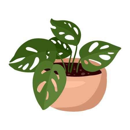 Hygge potted plant. Cozy lagom scandinavian style plant image