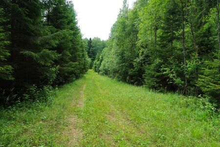 Image of the forest trail. Hiking morivational photo. Russian nature landscape