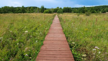 Nature trail boardwalk in the field. Outdoor recreational activities, eco trail