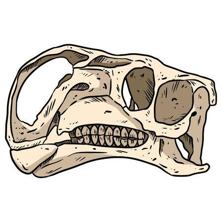 Altirhinus skull line hand drawn sketch image. Iguanodontian ornithopod dinosaur fossil illustration