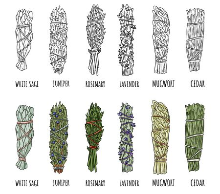 Set of sage and herbs sage smudge sticks bundles. Vector stock hand-drawn set of isolated doodles on white background. Collection of bundles. Sage, rosemary, lavender, cedar, juniper, mugwort
