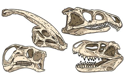 Dinosaurs hand drawn skulls colorful doodles set. Carnivorous and herbivorous fossils collection of images. Vector image Vettoriali