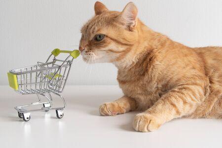 Ginger cat with shopping cart on white background looking curiously. Cute pet deciding to go buy groceries in animal store. Small miniature shop trolley. Copyspace poster