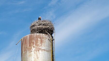 White stork bird in a nest on a water tower on a blue cloudy sky background. Russia, Moscow. 写真素材