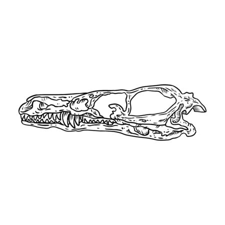 Stylized velociraptor dinosaur fossilized skull hand drawn image isolated on white background. Freehand sketch of carnivorous reptile dinosaur fossil illustration museum vector stock drawing