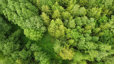 Aerial view of forest during a summer day. Green trees top view. Photo from above