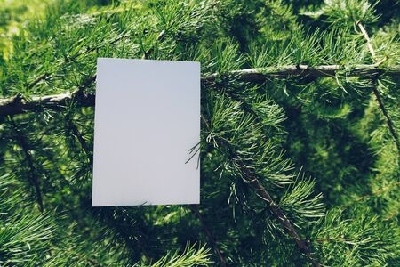 Mock up of vertical postcard on a larch branch. Boho design of postcard among coniferous fir branches with copy space for your image or text. Place design here