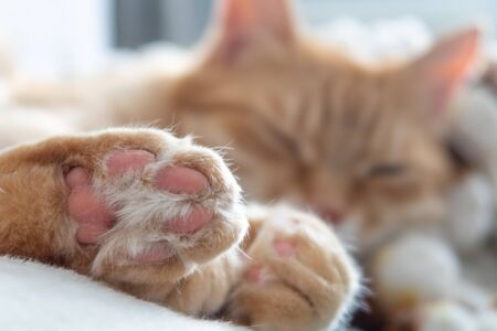 Ginger cat sleeping peacefully. Cozy kitten paws beans in selective focus. Adorable comfortable relaxing cat at home. Blurred background 写真素材
