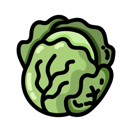 Cabbage outlined icon. Vector vegetable  isolated on white background. Vegan food symbol, media glyph