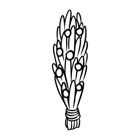 Juniper stick hand drawn smudge doodle. Vector isolated cartoon sage herb bundle image. Smoking cleansing magical wiccan indigenous item  イラスト・ベクター素材