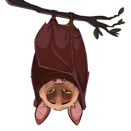 Vector linear illustration of the flying bat hanging upside down. Funny comic style cute outline bat doodle. Hand drawn sketch of sleepy bat isolated on white background.