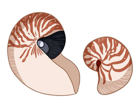 Nautilus shells colorful doodles isolated on white background vector illustration. Hand drawn sea shell art