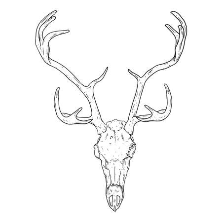 Deer fossilized skull hand drawn sketch image. Horned artiodactyl animal bones fossil illustration drawing. Vector stock outline silhouette
