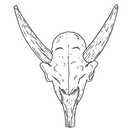 Saiga fossilized skull hand drawn sketch image. Horned antelope animal bones fossil illustration drawing. Vector stock outline silhouette