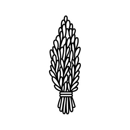 Sage smudge stick hand-drawn doodle isolated icon. Rosemary herb bundle. Vector stock plant leaves flat image Çizim