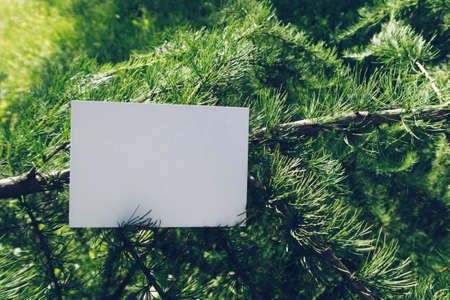 Mock up of horizontal postcard on a larch branch. Eco design of postcard among coniferous fir branches with copy space for your image or text. Place your design here