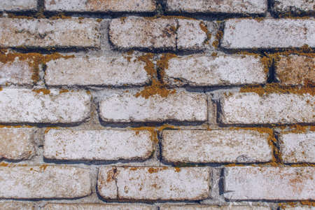 Old brick textured wall. Fried orange moss on the white wall stock photography background.