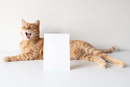 Ginger cat yawning with vertical postcard on white table background mockup. Cute pet with copy space card for your image or text. Pet shelter, veterinarian concept image