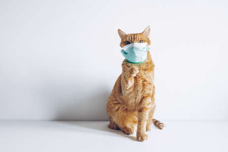Cat wearing medical mask on white background because of virus or air pollution or virus epidemic.  Place for text stock photography