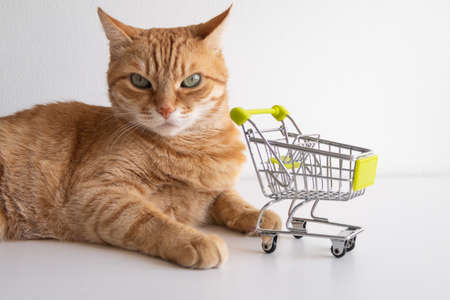 Ginger cat with shopping cart on white background looking seriously. Cute pet deciding to go buy groceries in animal shop. Small miniature shop trolley. Copyspace poster