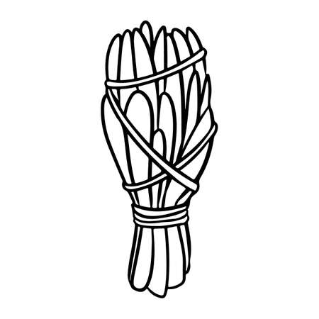 Sage smudge stick with threads hand-drawn doodle isolated icon. Vector plant leaves image. White sage herb bundle