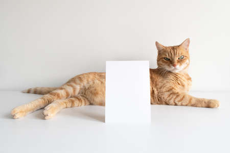Ginger cat with vertical postcard on white table background mockup. Cute pet animal with copy space card for your image or text. Pet shelter, veterinarian concept image Фото со стока