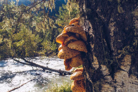 A group of orange mushrooms growing on a tree. Nature textured fungi on a tree bark. River on the background countryside wildwood stock photo Фото со стока