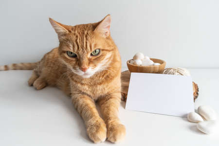 Ginger tabby cat with horizontal postcard and white pebble on white table background mockup. Cute pet animal with space card for your image or text. For macrame and handicrafts Фото со стока