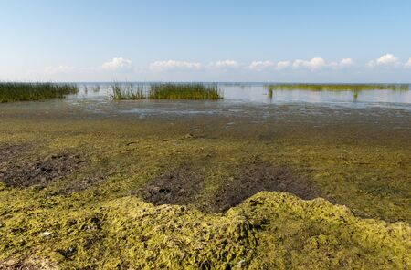 wrack: Alga on Gulf of Finland Stock Photo
