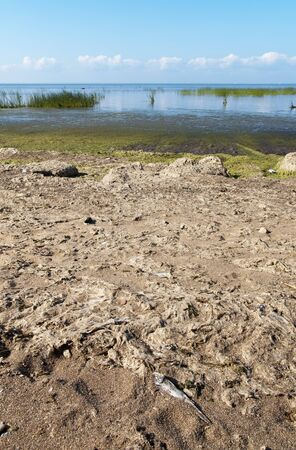 algal: Alga on Gulf of Finland Stock Photo