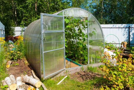 Open door greenhouse with cucumbers in russian countryside in summer