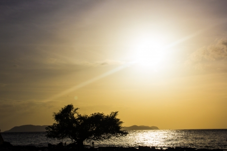 Silhouette Tree with sea and sun at Koh Lan Pattaya Thailand Stock Photo - 14202501