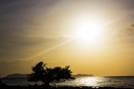 Silhouette Tree with sea and sun at Koh Lan Pattaya Thailand Stock Photo - 14202501