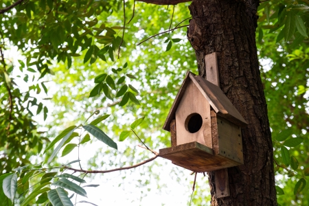 Small bird house on a tree 版權商用圖片 - 14939952