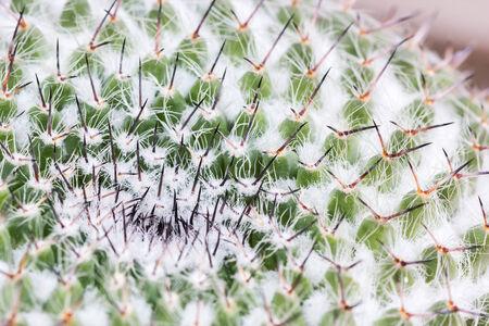 Macro of cactus in the garden photo