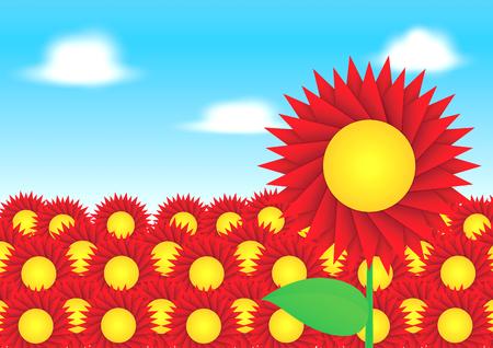 sun flower: Red sun flower on blue sky background
