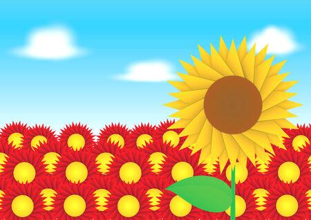 sun flower: Sun flower on red flower background, VECTOR, EPS10