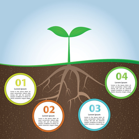 Plant And Root Infographic Background Design Template, VECTOR, EPS10 Illustration