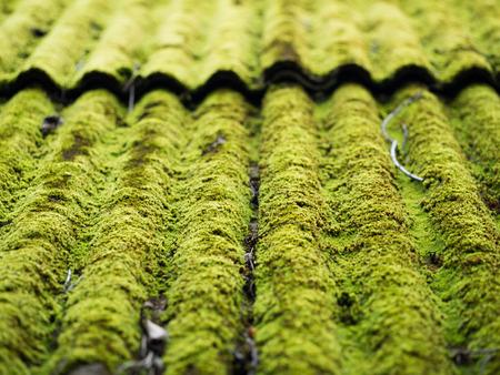 Groene mos groeit op oude dakpannen