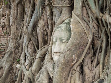 Ancient Buddha Statue in tree roots at Mahatat Temple, Ayuttaya, Thailand photo