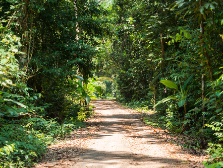 walking trail: Walking trail in forest at Koh Kood, Trat, Thailand