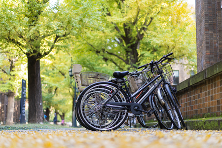 TOKYO, JAPAN - November 20, 2018: Bicycle parking inside the University of Tokyo with ginkgo yellow leaves.