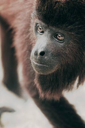 La mirada del mono