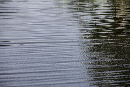 back yard pond: Water surface of a back yard pond