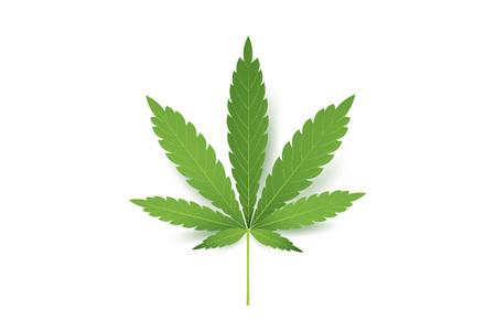 Réaliste icône de feuille de marijuana. Isolé sur fond blanc illustration. Cannabis Médical.