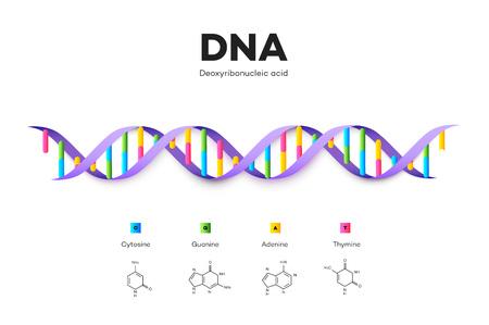 Molecular Structure Of DNA. Infographic Educational Vector Illustration Illusztráció